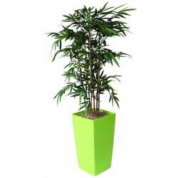 Bambou bac carré